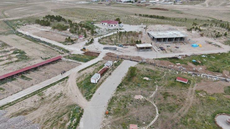 'Anadolu Aslanı' bu çiftlikte korunacak