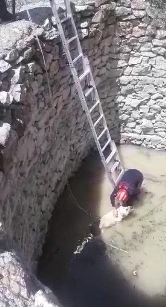 Su dolu kuyuya düşen köpeği itfaiye kurtardı
