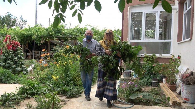 Büyükşehirden taşındılar, evlerinin bahçesinde ipekböceği yetiştiriyorlar
