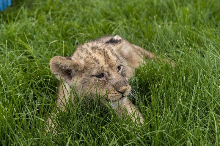 Büyükşehir Belediyesi Hayvanat Bahçesi'nde yeni yavruların sevinci yaşanıyor