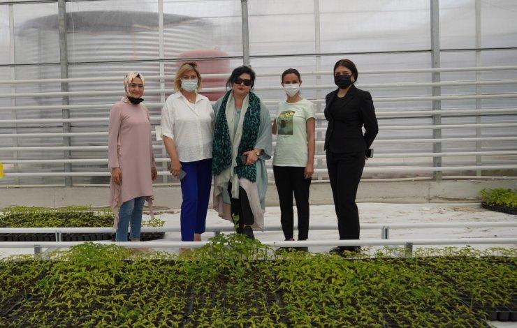 Keçiören'deki akıllı serada sebzeler ve çiçekler aynı anda üretiliyor