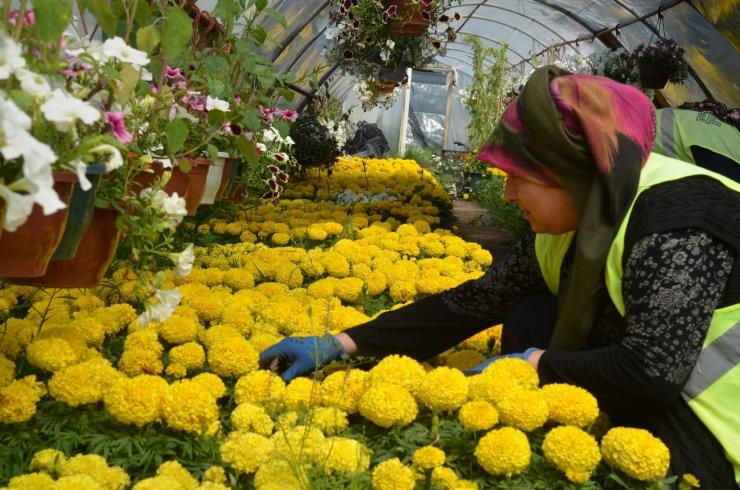 Kırıkkale'de cadde ve sokaklar çiçekler ile renkleniyor